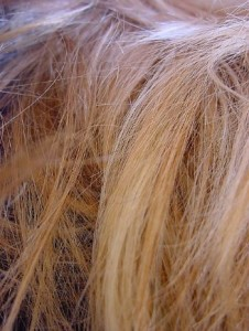 friseur-haare-pfusch