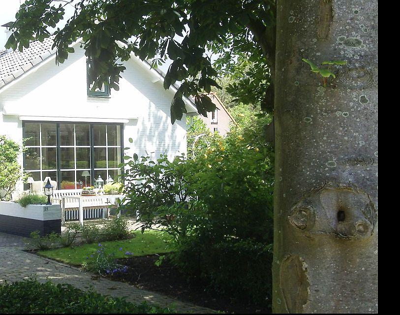 Baum, Haus, Garten