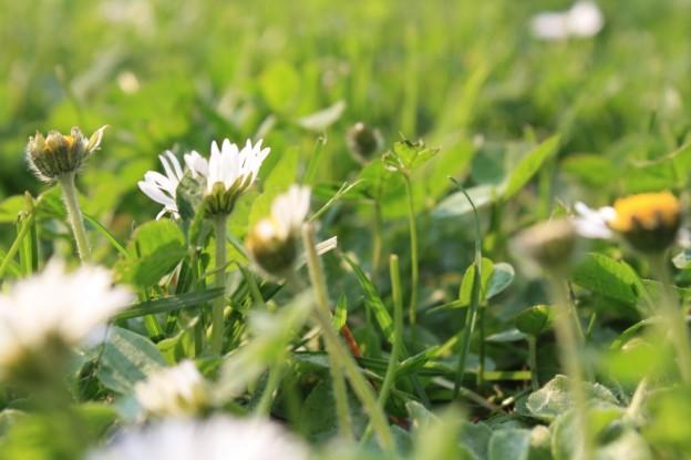 Blumen, Sommer