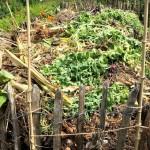kompost3453-978x1024
