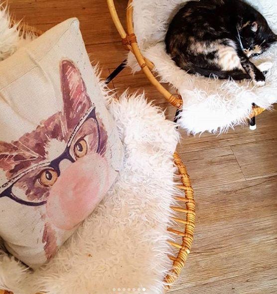Rueh vor dem Spielen: Hauskatzen brauchen viel Abwechslung (Foto: A. Kaatz)